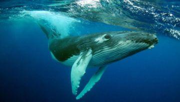 Au départ de Prony - Semaine - Sortie baleines + Stop ilôt Casy