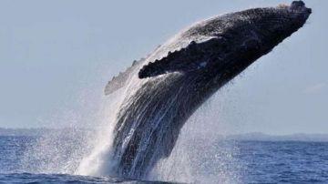 Au départ de Nouméa / Vallon - Week End - Sortie baleines