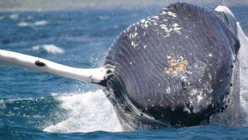 Sortie baleine + Chambre d'hôtes