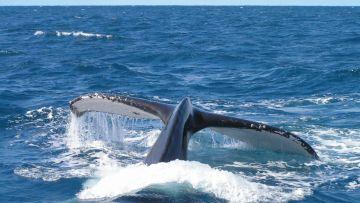 Sortie baleine + Camping