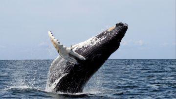 Sortie baleine +stop ilôt Casy en semaine avec Nautica