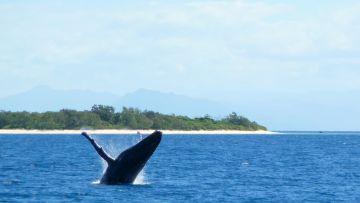 Les sorties observations des baleines en semi-rigide au départ du Kanua Tera