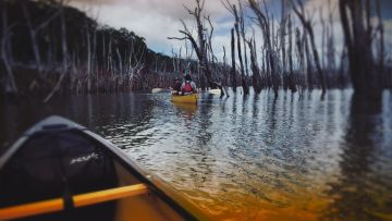 Canoeing in the moonlight- Blue River and submerged forest-Guided night outing
