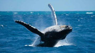 sortie baleines + Stop île Ouen en weekend  (repas à la tribu de Ouara inclus/départ Prony)