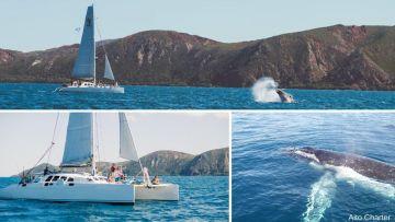 Les sorties observation des baleines en catamaran voile - Week-end & férié - Départ Nouméa
