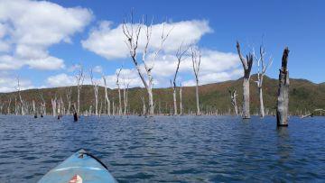 Grande Traversée Kayak - la Forêt Noyée sur tout le 2ème tiers