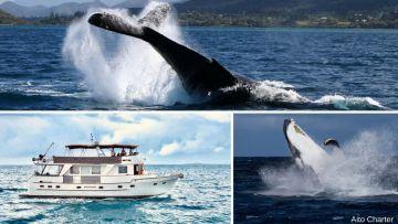 Les sorties observation des baleines en Trawler - Départ Nouméa