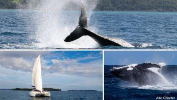 Les sorties observation des baleines en catamaran voile - SEMAINE - Départ PRONY