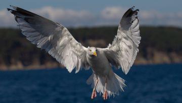 Après-midi Oiseaux Marins