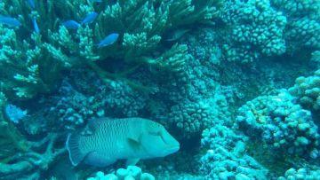 Weekend Découverte Île Ouen et les 5 îles